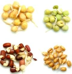 Проростки – полезная пища и эффективное лекарство