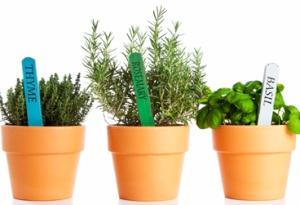 прянные растения